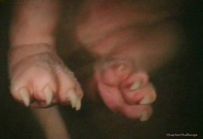 foetus-53-dagen-achterpootjes